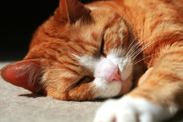 If You Die Unexpectedly, What Happens to Your Cats?