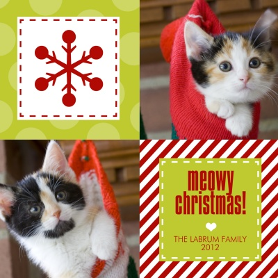 5 ideas for a holiday greeting card starring your cat catster simplytoimpress offers other pet centric holiday photo cards as well including multiple variations on this meowy christmas theme m4hsunfo