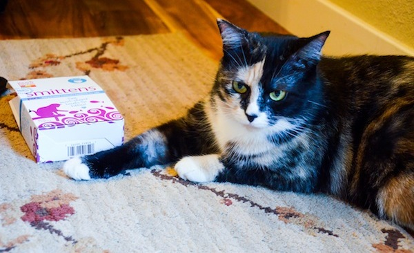 Win a Prize Pack for Your Cat From the Honest Kitchen