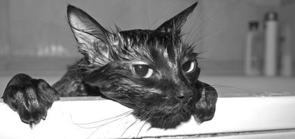 How To Clean Tough Messes From Your Cat S Fur Catster