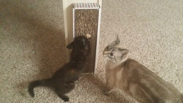 If The Cats Really Need To Flex Their Scratching Muscles, They Donu0027t Need  To Go Far. My Babies Can Jump Down, Have A Little Scratch, And Be Back On A  Warm ...