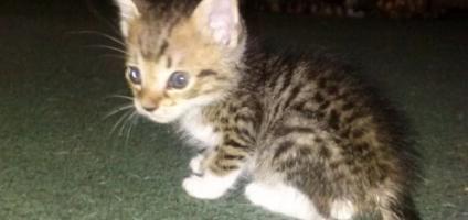 Spots and Stripes Rescues Florida's Wayward Bengal Cats