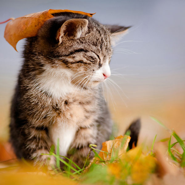 Images Of Cat Dry Food