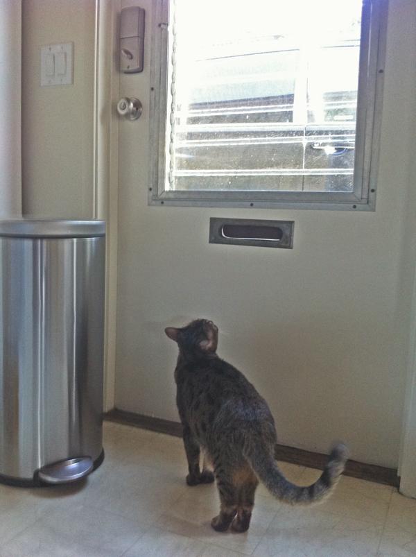 What Lies Beyond The Kitchen Door According To My Cat Catster