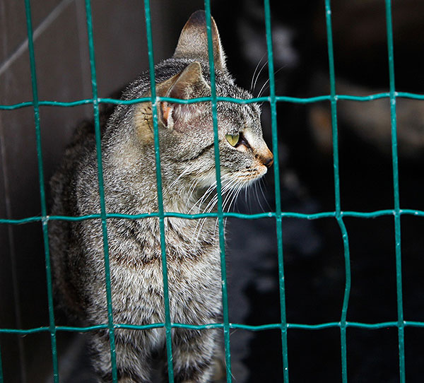 Cat in a shelter by Shutterstock