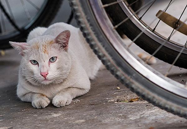 Stray cat in the street by Shutterstock