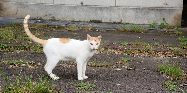 Do You Get Too Attached to the Feral Cats in Your Care?
