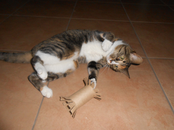 A cat playing with a homemade cat toy.