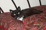 5 Ways I'm Making My Senior Cat's Life Better