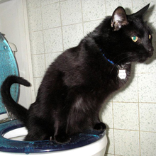 I Think Toilet Training a Cat Is a Bad Idea Whos With