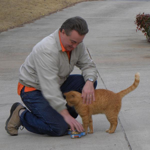 An orange cat hitting tinned wet food.