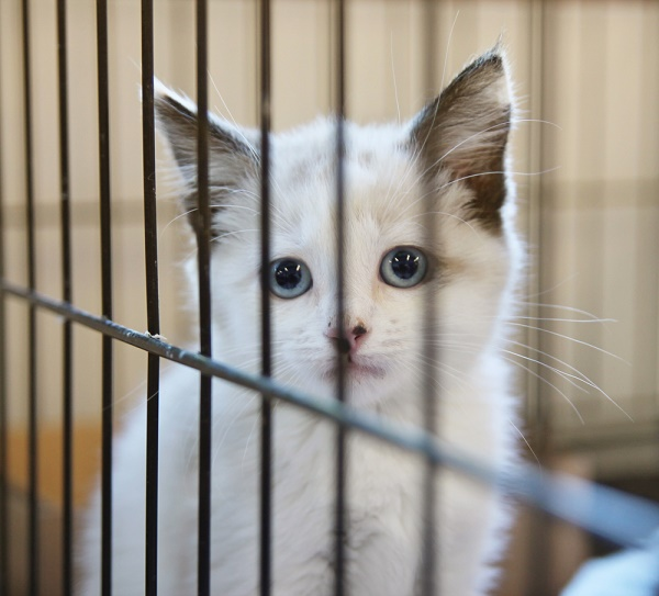We Can't Save Every Cat; How Do We Reconcile That Fact?