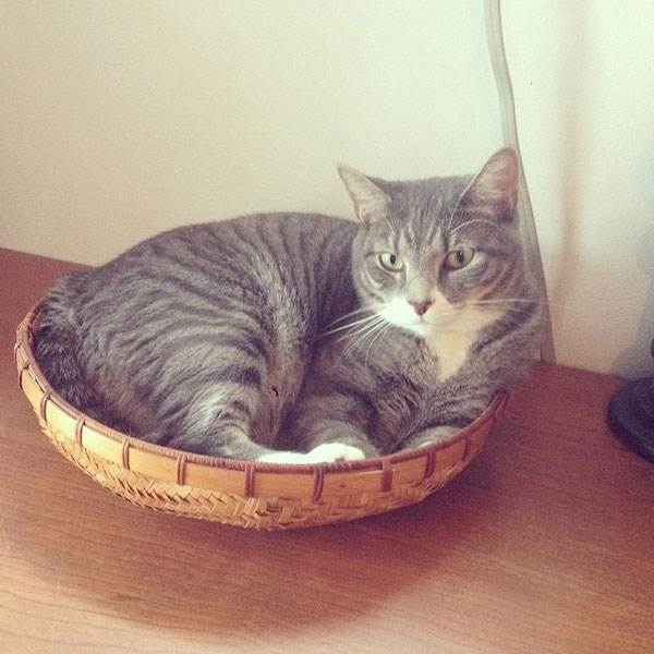 Are Exotic Fruits Safe For Cats Catster