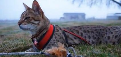 Guinness World Records: A Cat Named Trouble Is Still