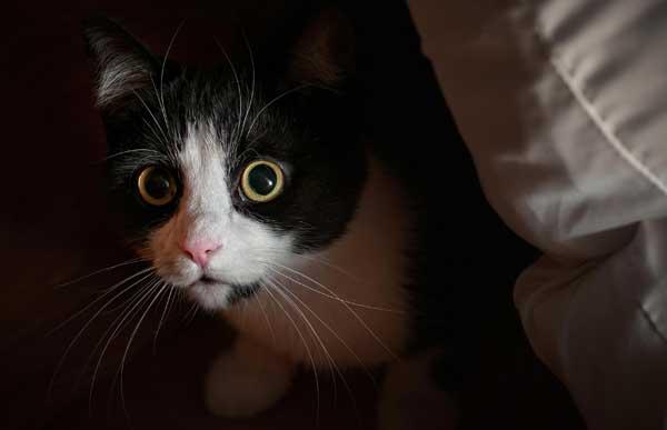tuxedo-cat-hiding.jpg