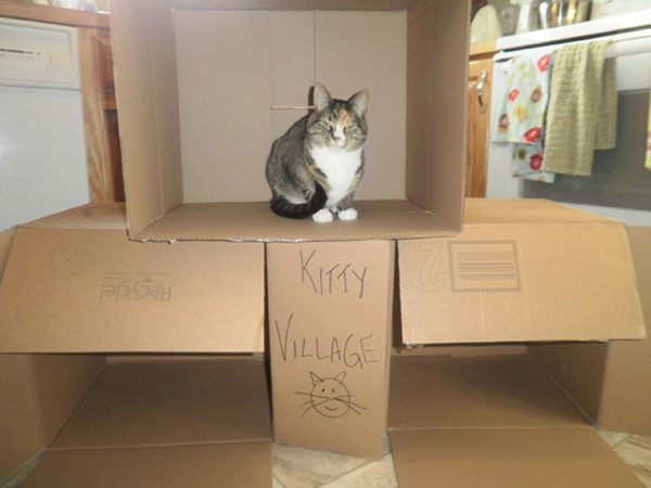 Family Project: Make Silly Box Forts for Your Cat