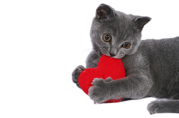 Image result for cats and valentines day
