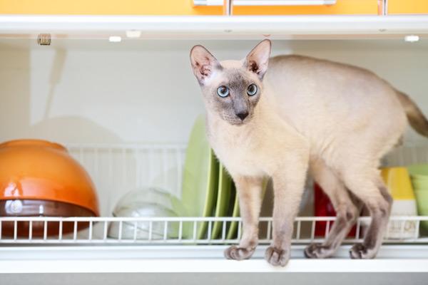 vertical-cats-dish-rack-99662906.jpg
