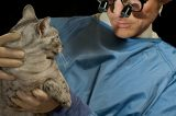 One More Reason to Book Your Cat's Next Vet Checkup Today