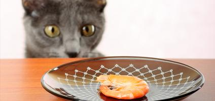 Dog Treat Dispenser >> Watch This Cat Attack an Automatic Food Dispenser - Catster