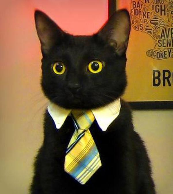 Sir Black Cat