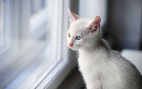 When Cats Fall They Are Likely To Suffer Severe Injuries That Extend Well Beyond Broken Bones This Is Particularly True From Heights