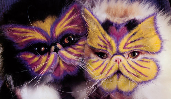 Why Can Cats Paint
