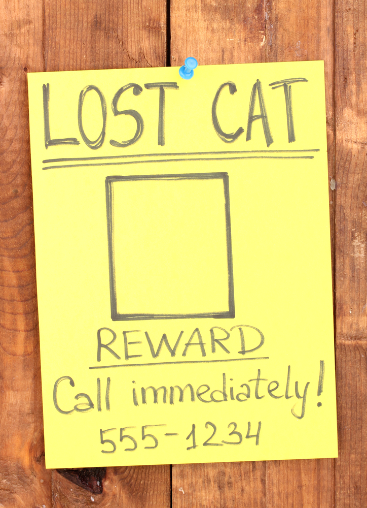 A lost cat sign.