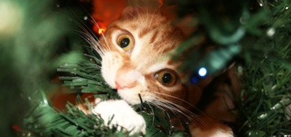 Cats Vs Christmas Trees.Videos We Love Cats Vs Christmas Trees Catster