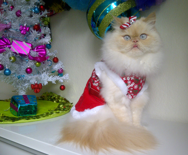 Holiday Gift Guide: For the Feline Fashionista on a Budget