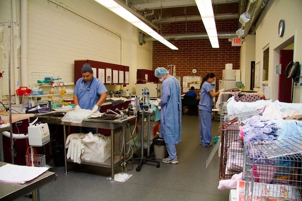 Veterinarians perform spay and neuter surgeries at the FixNation clinic.