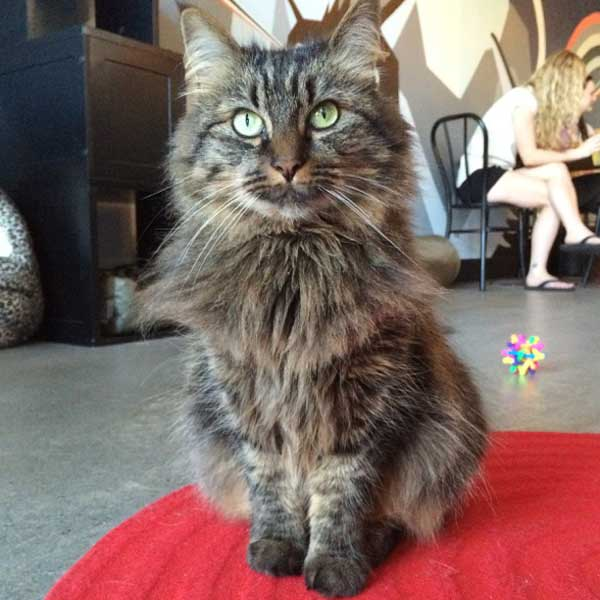 Another gorgeous kitty who was up for adoption the day we visited. (Photo by Kezia Willingham)