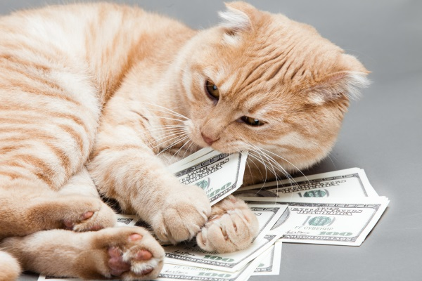 A pet protection agreement allows a specified guardian to pay for your cat's vet bills.