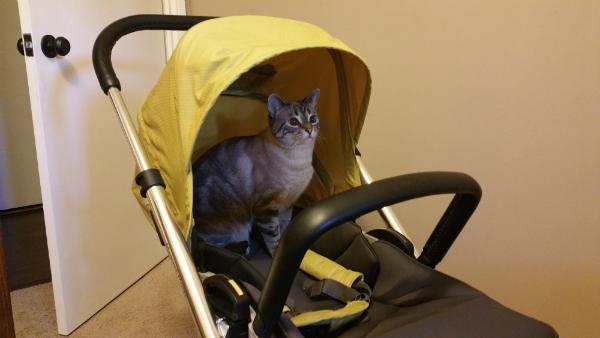 Ghost Cat in stroller