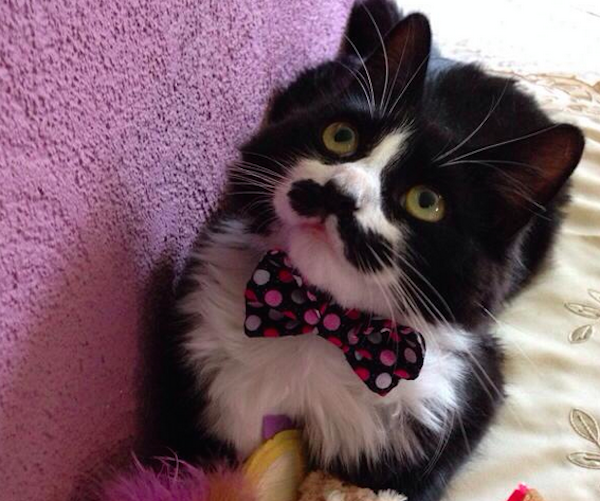 MuppetMustachedCat2