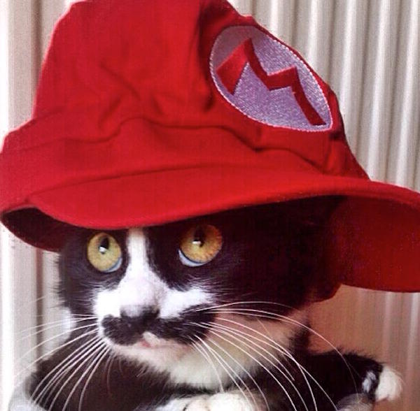 MuppetMustachedCat8