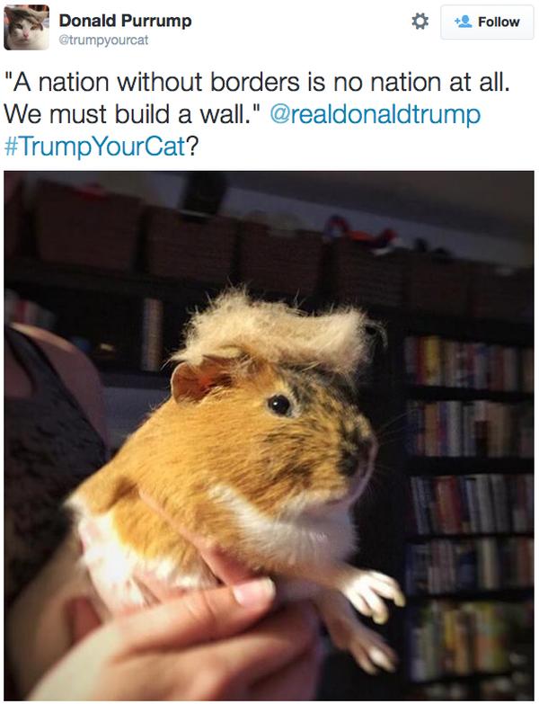 Trump-Cat-Twitter-Guinea-Pig