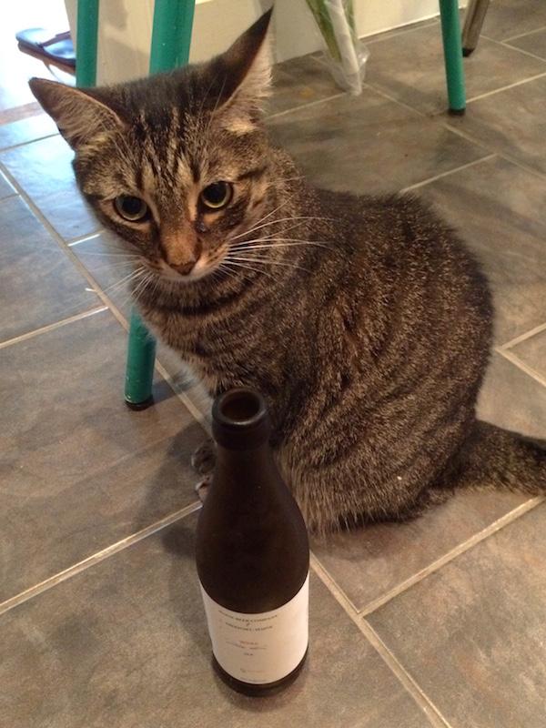 Weez-Beer-Mimosa