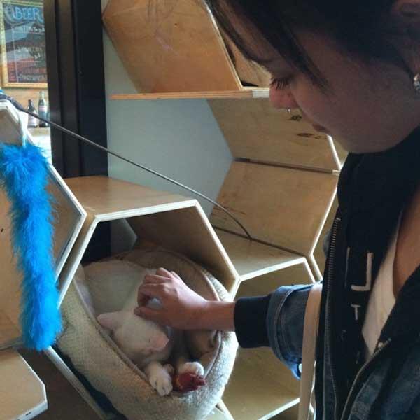 Zinnia pets a sweet, sleepy kitty. (Photo by Kezia Willingham)
