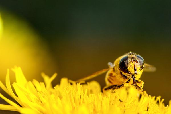 allergies-bee-pollen-270979208