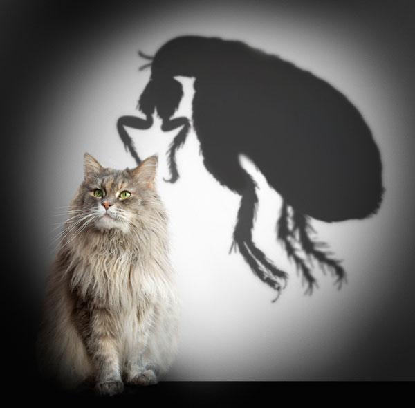 It's behiiiiiind you. Cat and flea shadow by Shutterstock
