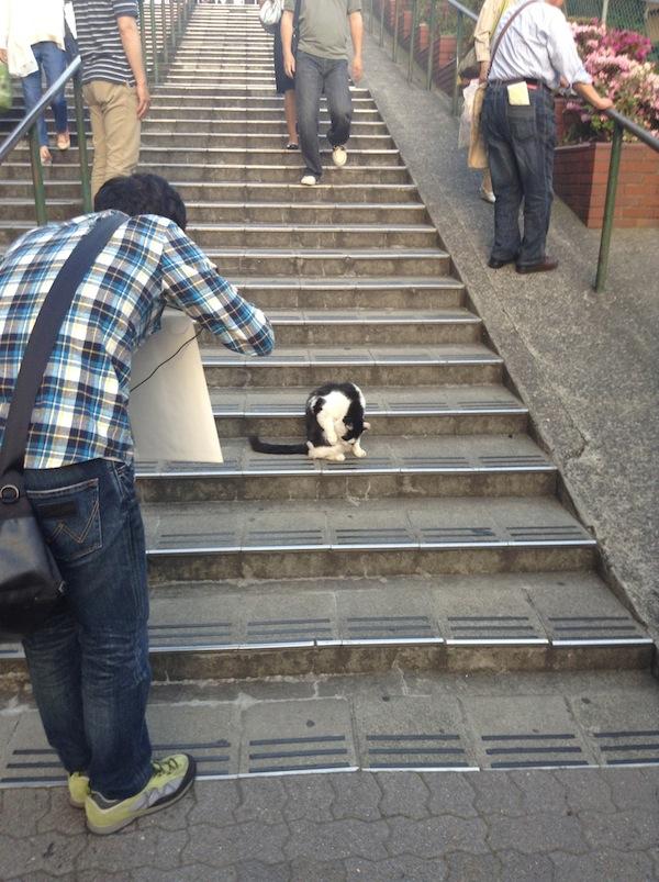 cat on stairs yanaka