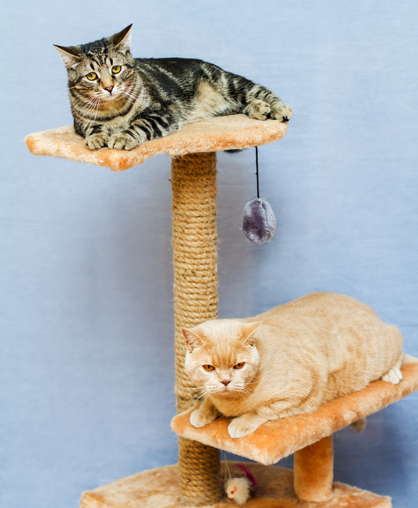 cat-summer-cool-tower-tree-157621712