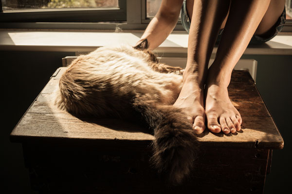 If it's too warm for you, it's probably too warm for your cat, too. Feet and kitty by Shutterstock
