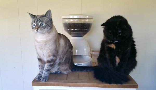 cats pouting