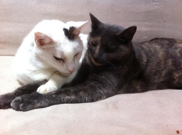 kieran-bluebell-cuddle