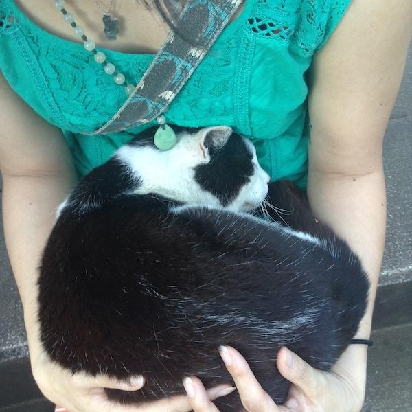 A little slice of kitty heaven.