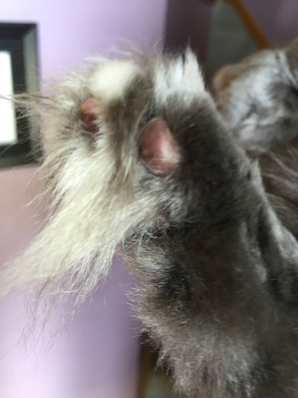 What Do You Call Your Cats Paw Pads Catster