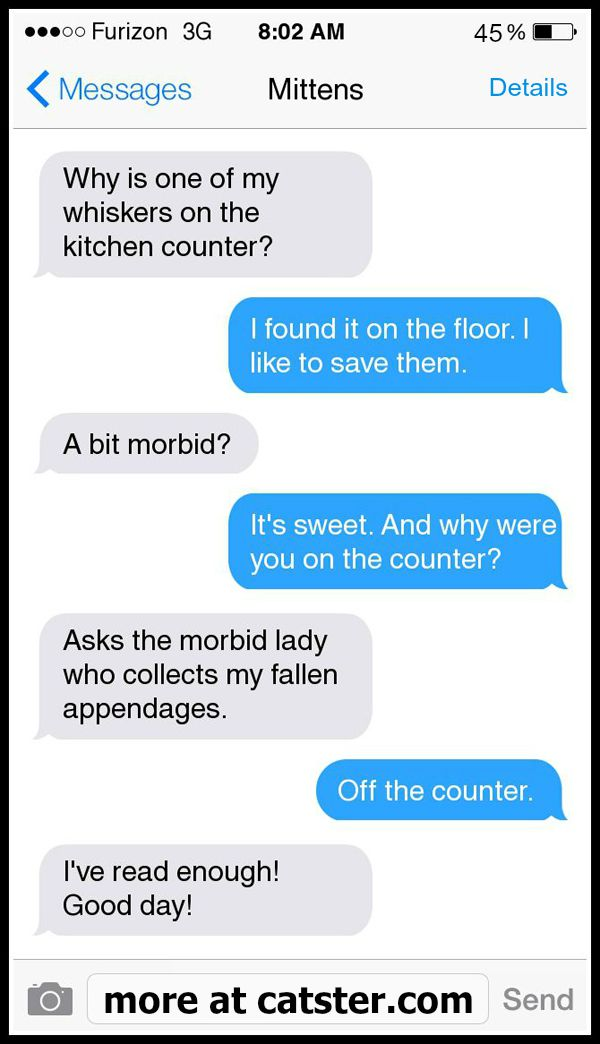 texts-from-mittens-whiskers-counter