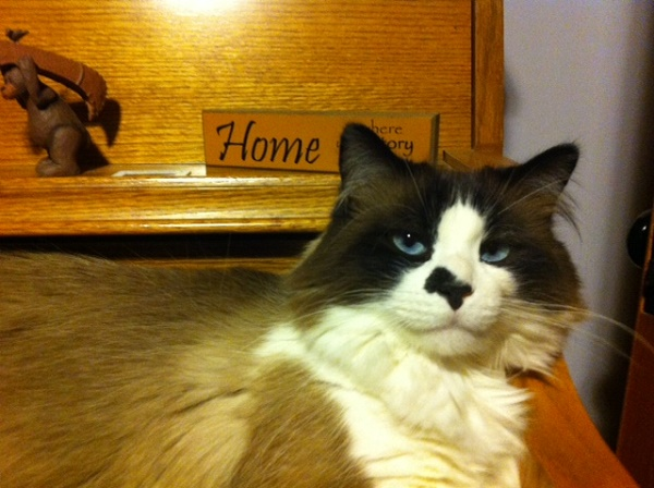 Zorro loves it when all is well at home, and he tends to get a sensitive stomach if stressed.